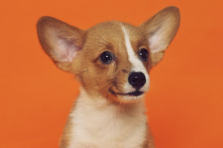 Randki online psa