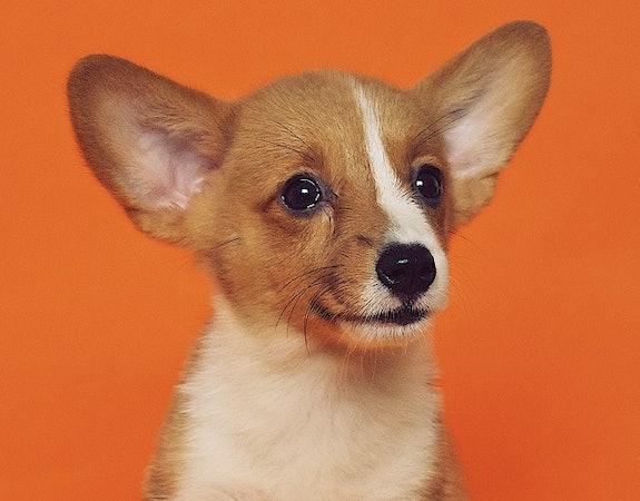Jak wychować psa? Poznaj najbardziej przydatne gadżety