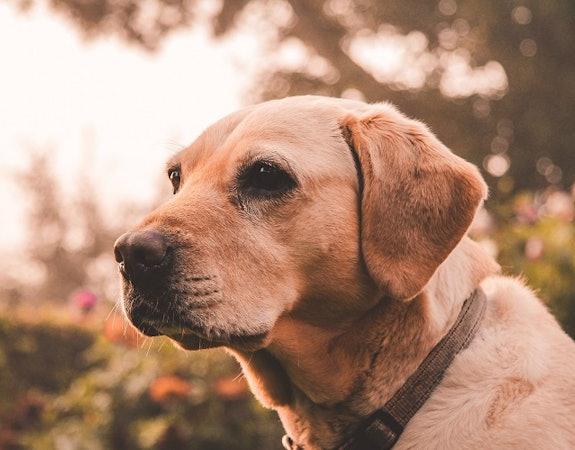 Jak zabezpieczyć psa przed kleszczami?