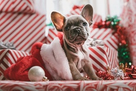 Pomysły na prezenty świąteczne i nie tylko. Gdzie ich szukać?