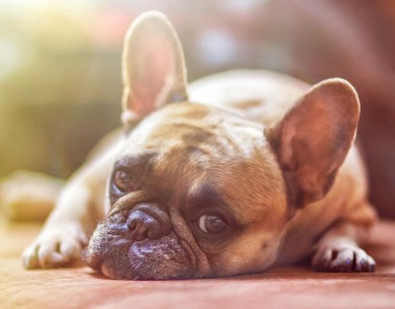 Sklep online Zooplus – najlepszy przyjaciel Twojego kota i psa